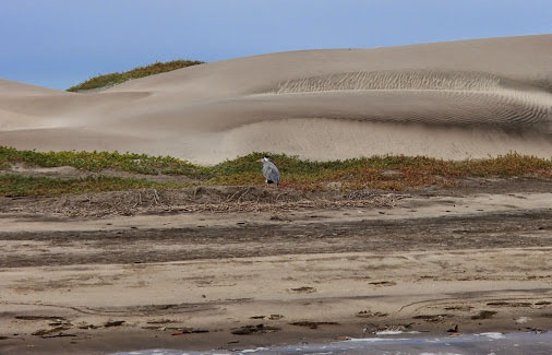 The dunes behind Whale Camp | Image courtesy ROW Sea Kayaking Adventures