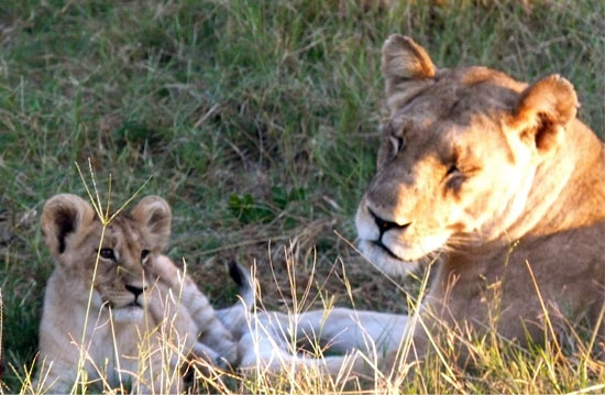 Mama with the lively cub | Photo courtesy Diana Ladden