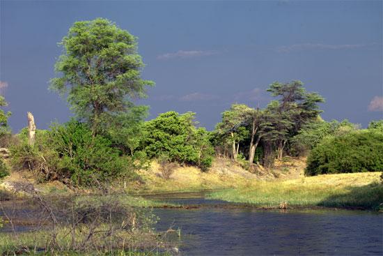 Botswana's Okavango delta | Image courtesy Stockfresh & Romas Vysniauskas